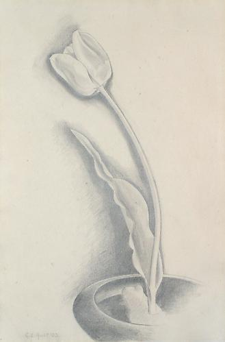 TULIP, 1933Graphite15 x 10 inchesSigned: G.C