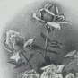 ROSES, c. 1932